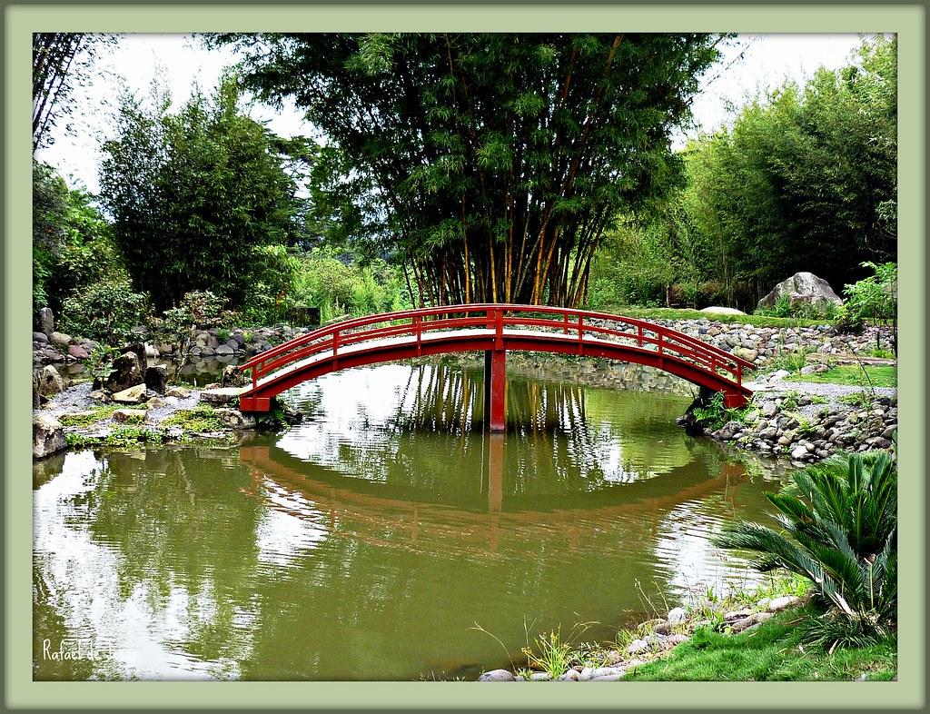 Puentes japoneses jardin botanico lankester japanese for Jardin lankester