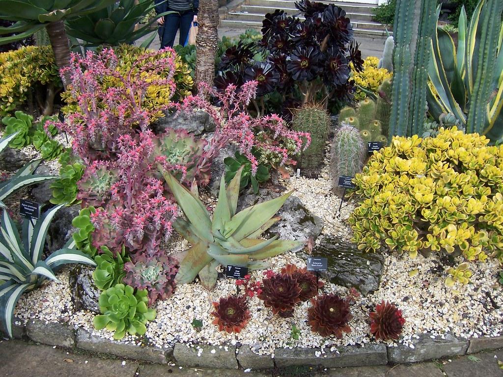 common succulents