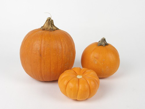 appropriately sized pumpkins | by 1lenore