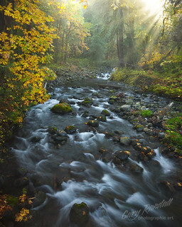 Autumn Along The Quinault | by Gary Randall