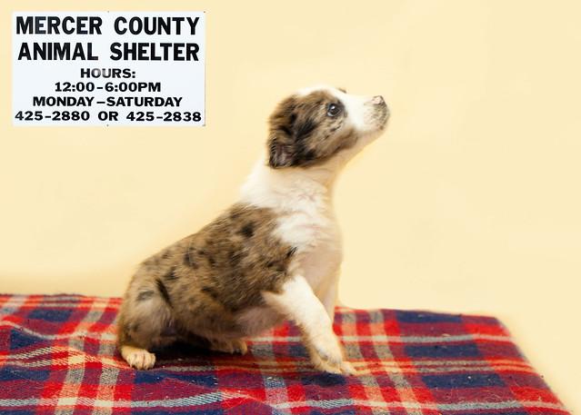 Mercer County Cat Adoptions Memorial Day Weekend