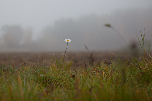 Misty morning #06 | by Pierre Pocs