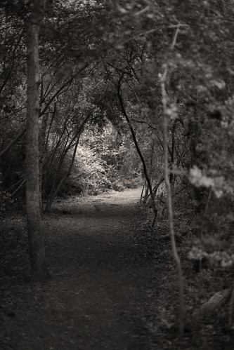 the path | by imagesbytam