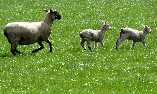 Mums..Ewe know that game | by walgert