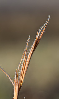 Frosty Grass | by North Carolina Museum of Natural Sciences