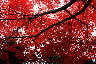 Colored leaves | by Takeshi Kawai