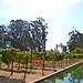 Gardens @ Sonoma Cornerstone