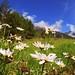 Flores y sus lindos colores...