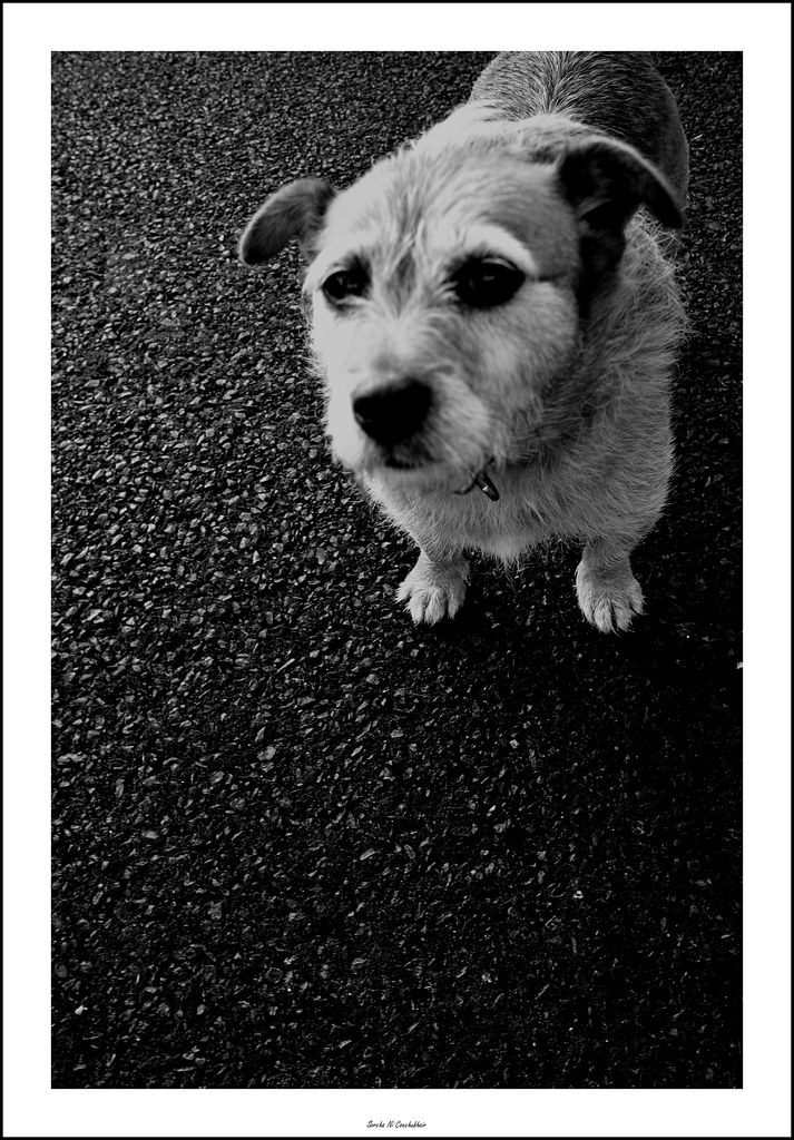 My Little Dog A Heartbeat At My Feet Edith Wharton Flickr
