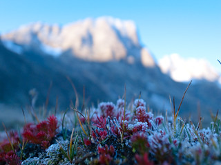 Day 3: Frozen morning flowers | by abalonia