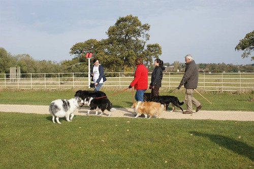 Go Walkies at Lydiard Park | by Guide Dogs UK