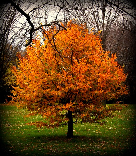Autumn in Upstate NY | by Jodi:)
