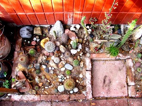 Jardin seco toma mate flickr - Recuperar jardin seco ...