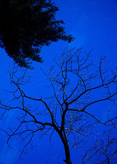night sky tendrils | by TheZmanAbides