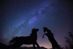 horsing around the galaxy
