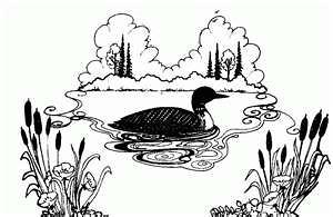 common loon drawing karen williams flickr