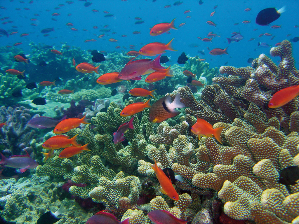 Virgin Islands Conservation Biology