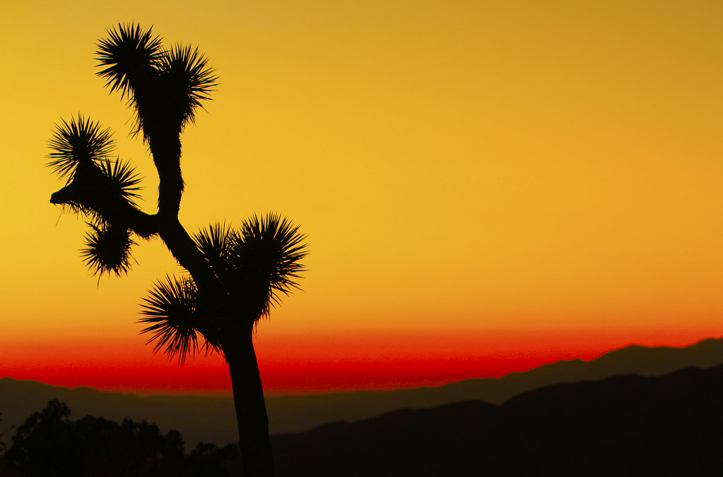 Desert Sunset Joshua Tree National Park California Flickr