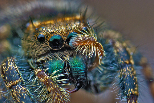 Jumping Spider Saluting | by PXLR