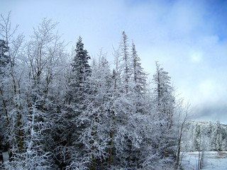 Hoarfrost at Ellis Trailhead 20111114 | by Kenneth Cole Schneider