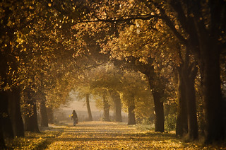 Alley in yellow leaves | by warmianaturalnie