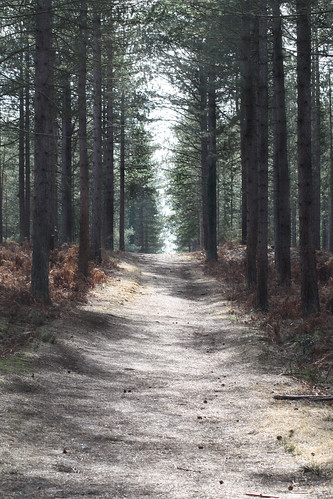 Moors Valley Country Park 1 | by Kevin Browne Photography