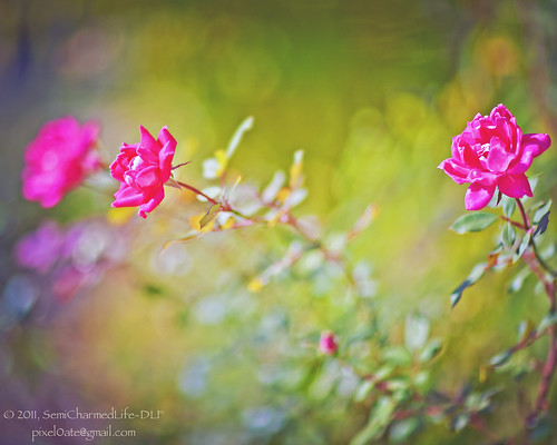 HBW! | by SemiCharmedLife (☯)