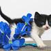 barney the kitten