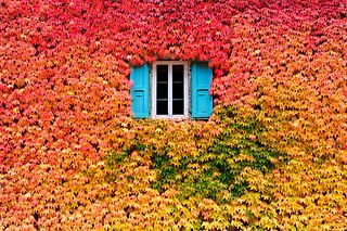 A Wall Of Fall | by Kala___