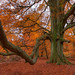 Herbst im Reinhardswald...