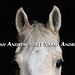 """""""The horse knows when you know and knows when you don't know.""""-- Ray Hunt"""