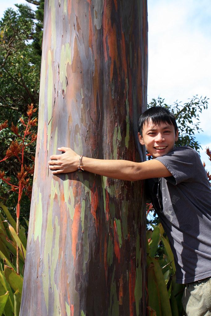 This rainbow eucalyptus turned Johnny into a tree hugger ...