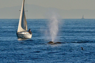 Boat and Blue Whale | by wmchu