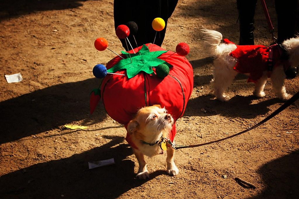 halloween dog parade 2011 tompkins square park east village new - Halloween Parade East Village
