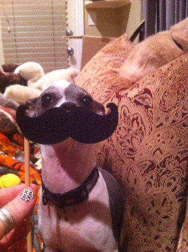 dogmustache | by Urban Threads