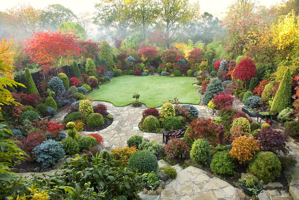 Autumn japanese maple colours are increasing in the upper for Simple garden ideas on a budget