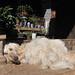 Dog days in China