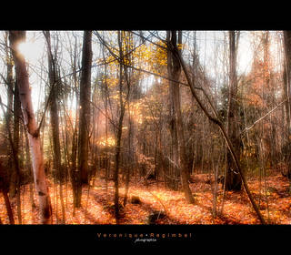 Rayons d'automne | by Veronique Regimbal