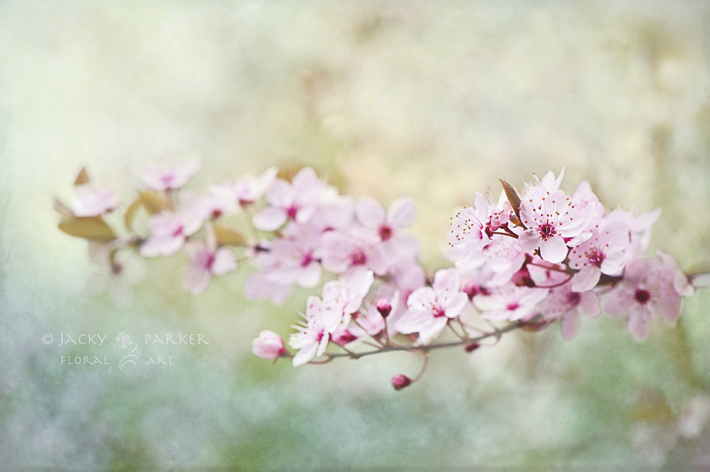 Photograph Spring Reverie by Jacky Parker