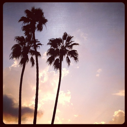 Crummy Mondays are made infinitely better by palm trees and clouds at dusk. | by jasfitz | letsfrolictogether.com