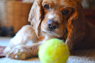 Does your dog love tennis as much as mine does? | by WilliamMarlow