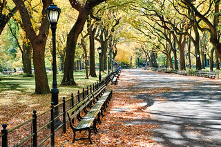 Autumn in Central Park | by Chuck Robinson