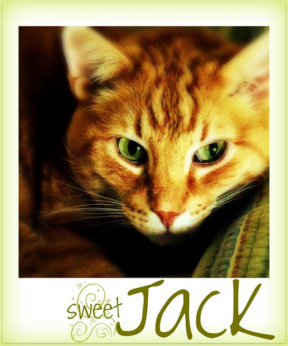 sweet, sweet Jack | by Bep1956