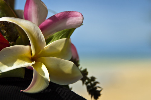 Tropical flowers on a paradise beach | by LimeWave Photo