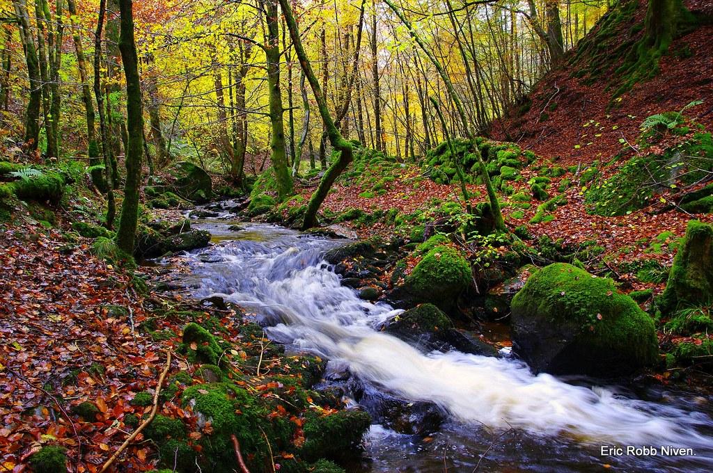 Birnam glen and the inchewan burn explored a fair for Foto paesaggi naturali gratis