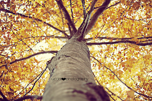 Autumn tree | by uccia♥photography