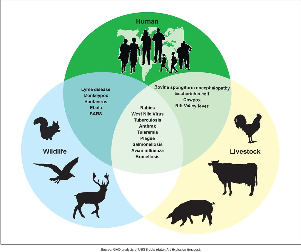 transmission of livestock diseases to humans essay On-site wastewater disposal and public health and wastes from humans and animals humans catch diseases from wastewater in a variety of ways.