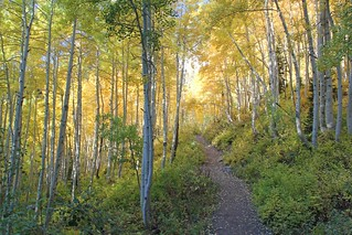 Big Cottonwood Canyon | by VisitSaltLake