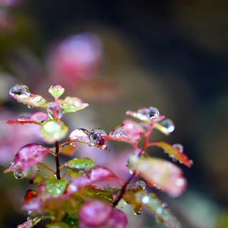 from autumn water droplets series | by Gay Foster