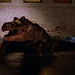 alligatorx